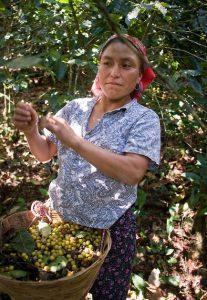 barista akademia_Guatemala (3)