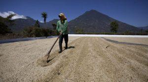 barista akademia_Guatemala (7)